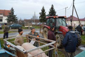 Održavanje stočnih sajmova u Piškorevcima