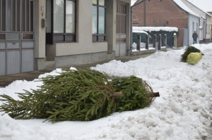 U Đakovu i prigradskim naseljima počinje odvoz božićnih drvaca